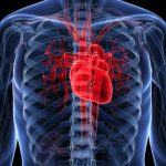 2 Supplements That Fix a Weak Heart